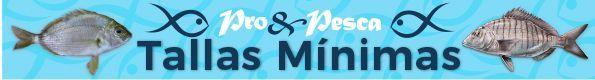 banner_mixto_proypesca