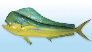 Dorado, Pez Delfin