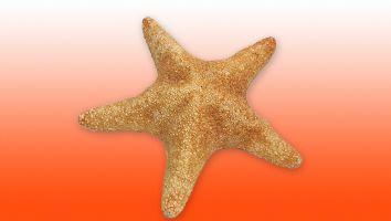 Estrella de mar Capitán