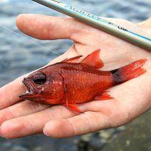 informa de la pesca de pezqueñines